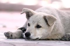 Cute lazy doggy resting in the shadow at noon Stock Photos