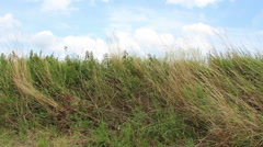 Grass at a railway embankment Stock Footage