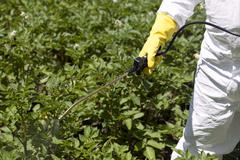 pesticide spraying - stock photo