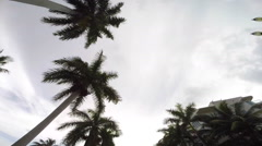Driving look up building palms Stock Footage