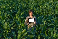 agronomist with tablet computer in corn field - stock photo