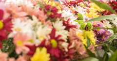 Beautiful Flowers selling in the free market of sao paulo. - stock footage