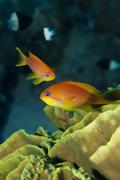 Orange tropical fish close up. Stock Photos