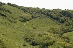 chalk downland. sussex. england - stock photo