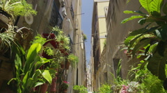Narrow city street with lots of plants in the summertime. No people. Stock Footage
