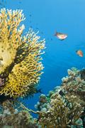 Pristine tropical coral reef. Stock Photos
