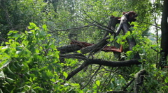 Fallen Tree In Aftermath Of Tropical Storm - stock footage