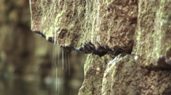 Dripping water from the rocks Stock Footage