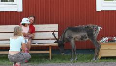 Reindeer grazing near a family Stock Footage