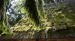 Roof moss-grown. Stock Footage