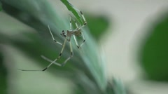 Spider insect sitting in web, macro HD Stock Footage