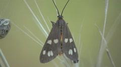 Butterfly sitting on green leaf, macro HD Stock Footage