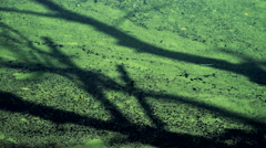 Shadow of a Tree on a Green Pond Surface Stock Footage