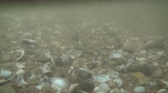 Little shells in the murky stream Stock Footage