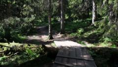 Walking a path in the woods, POV Stock Footage
