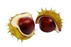 Half horse chestnut - stock photo