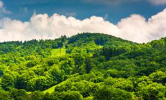 Summer view of ski slopes at canaan valley state park, west virginia. Stock Photos