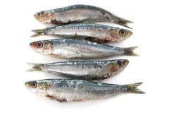 fresh sardine - stock photo