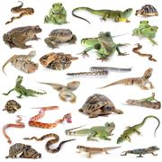 reptile and amphibian - stock photo