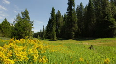 Flowers windy gusts over meadow dinkey creek rd Stock Footage