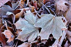 Frost on the fallen leaves - stock photo