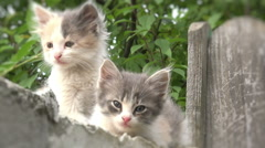 Two kitties on a fence blurred,cats Stock Footage