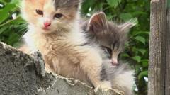 Two kitties hiding Stock Footage