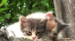 Two kittens alert Stock Footage