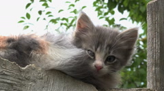 Kitty looking,cat outside Stock Footage