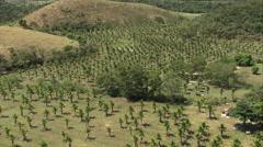 Aerial Brazil- Palm groves, Rio de Janeiro, Silva Jardim, Stock Footage