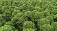 Aerial Brazil- Slow low drift over tree tops, Minas Gerais, Stock Footage