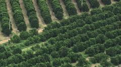 Stock Video Footage of Aerial Brazil- Orange grove, Minas Gerais, Madre de Deus de Minas,
