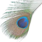 green peacock feathers - stock photo