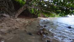 Glidecam tree canopy at beach Stock Footage