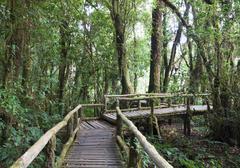 Beautiful rain forest at doi inthanon Stock Photos