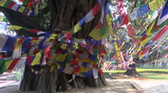 Tree with  buddhist flags in Lumbini, Nepal Stock Footage