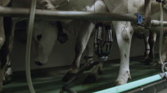 0368 Cows in a stable during automatic milking Stock Footage