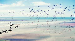 Birds flying and abstract sky ,spring background abstract happy background Stock Footage