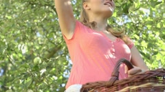 Young woman up on a ladder picking apples on a lovely sunny summer day Stock Footage