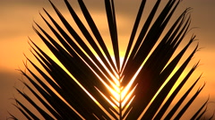 4K  Palm Frond Tropical Vacation Sunset Stock Footage