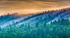 Stock Photo of fog over pine trees at sunrise, seen from devil's courthouse, near the blue r
