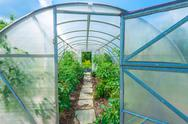 Arched greenhouse Stock Photos