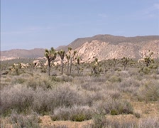 Desert valley in Joshua Tree National Park + pan - hold at Joshua Tree Stock Footage