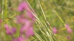 willow-herb - stock footage