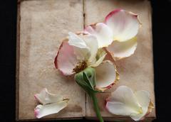 Vintage book with fallen rose petals Stock Photos