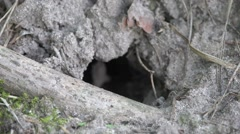 Hole in the ground, HD Stock Footage