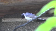 Swallow sitting on wire farm HD Stock Footage