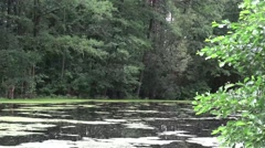 Fresh green background River Lake, HD Stock Footage