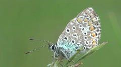 Butterfly sitting on green leaf, macro HD Stock Footage