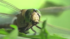 Head green Darner dragonfly insect macro hd Stock Footage